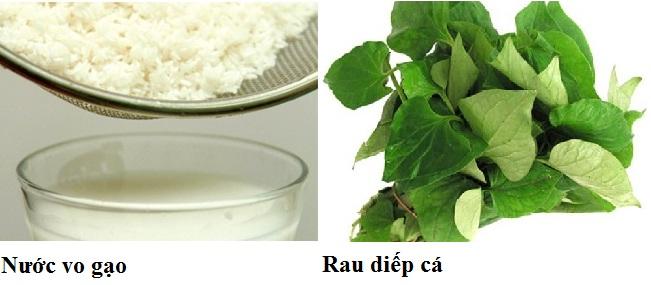 huong-dan-chua-viem-amidan-bang-rau-diep-ca2