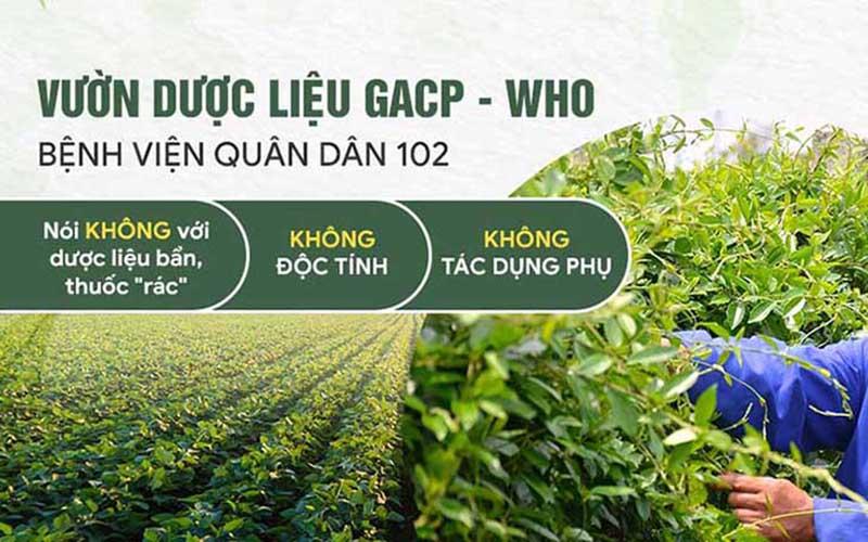 Ưu điểm thảo dược sạch của bệnh viện Tai Mũi Họng Quân dân 102